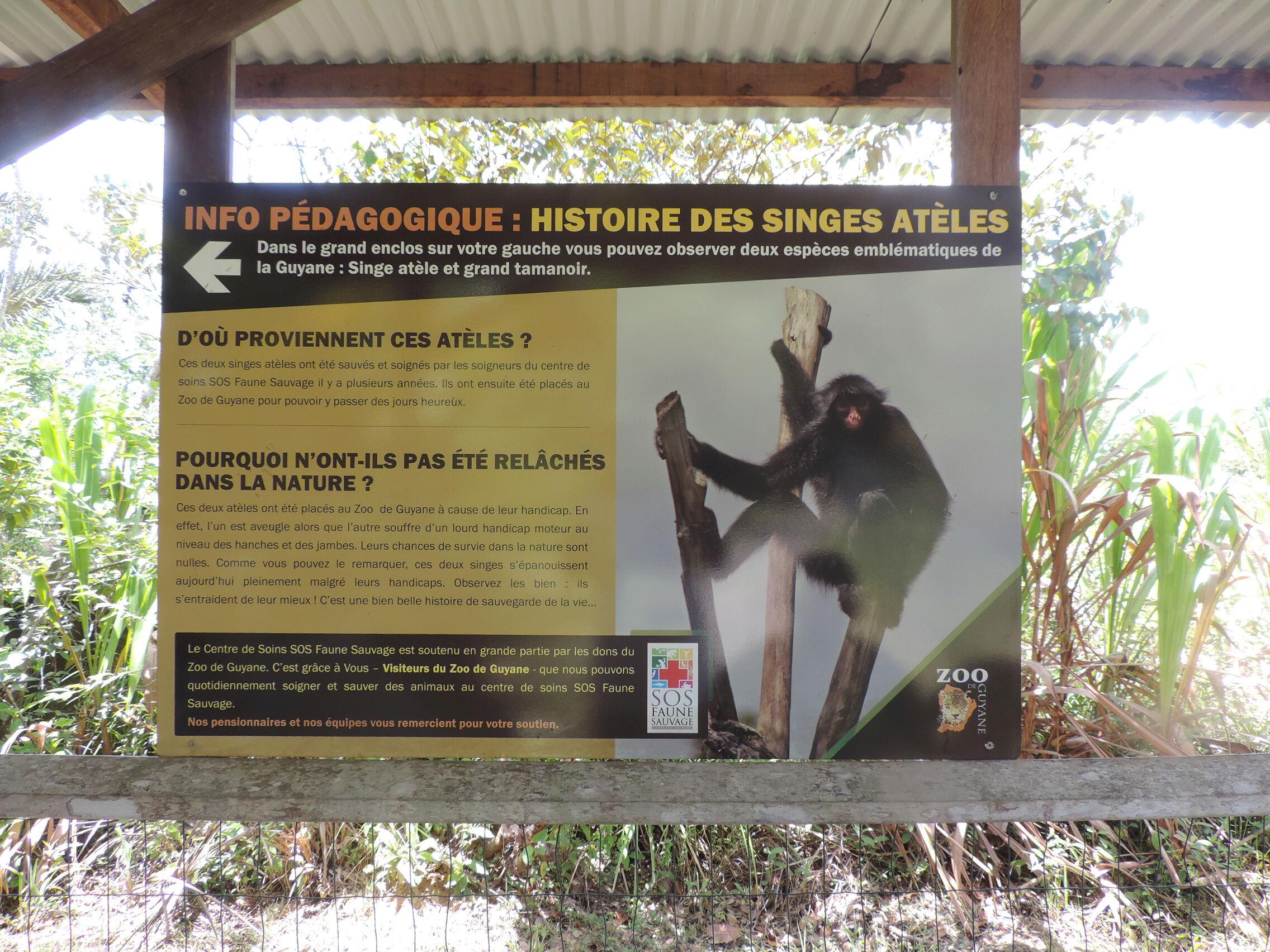 La Guyane en 2018  - Page 11 Dscn0258