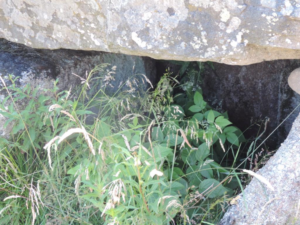 flore des vieux murs, rochers  et rocailles naturelles - Page 8 Dscn0305