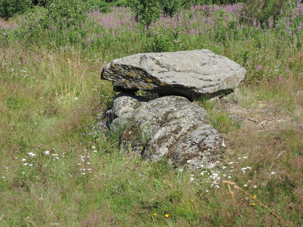 flore des vieux murs, rochers  et rocailles naturelles - Page 8 Dscn0306
