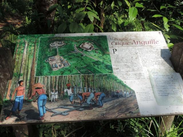 La Guyane en 2018  - Page 7 Dscn0318