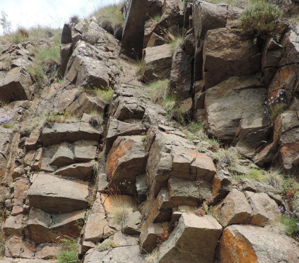 flore des vieux murs, rochers  et rocailles naturelles - Page 8 Dscn0366