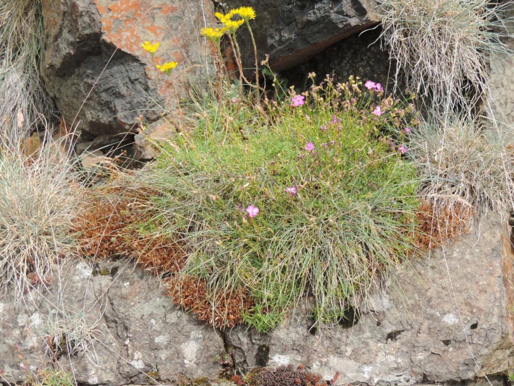 flore des vieux murs, rochers  et rocailles naturelles - Page 8 Dscn0367
