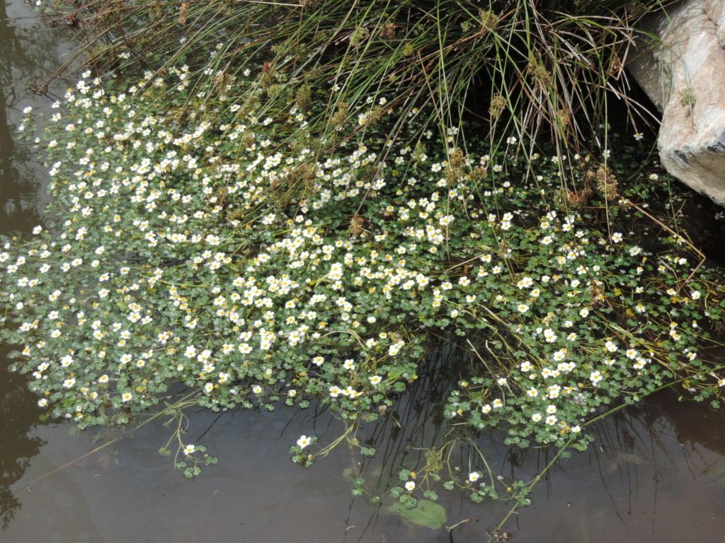 A la source de la Loire  Dscn0418