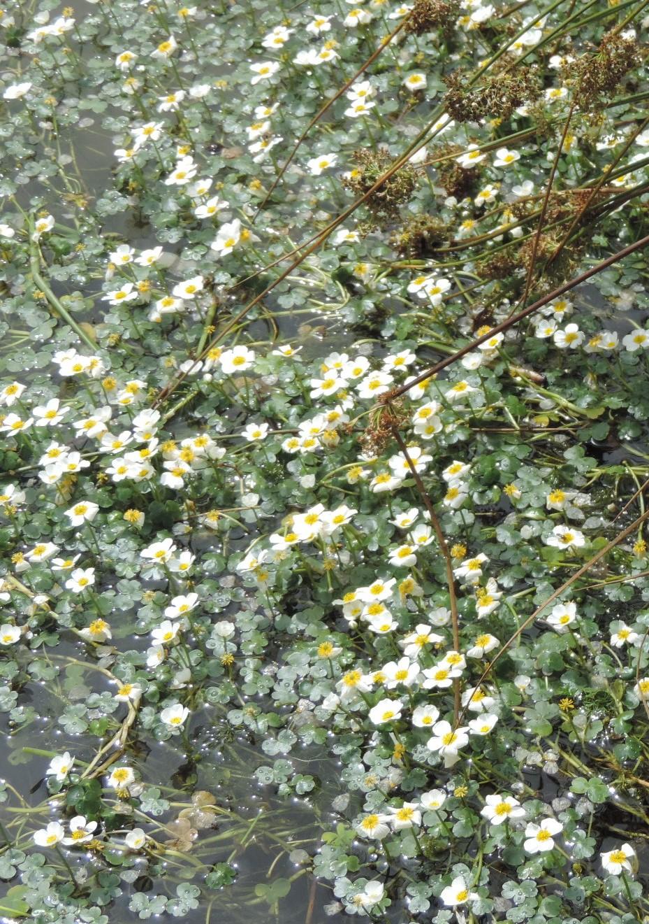 A la source de la Loire  Dscn0419