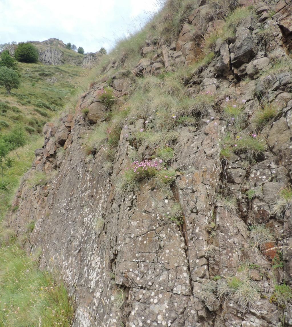 flore des vieux murs, rochers  et rocailles naturelles - Page 8 Dscn0429