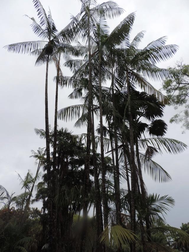 La Guyane en 2018  - Page 2 Dscn9312