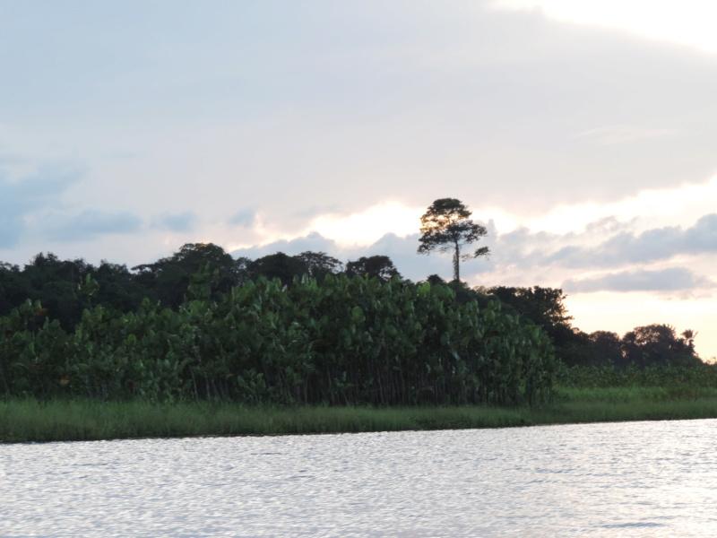 La Guyane en 2018  - Page 10 Dscn9326