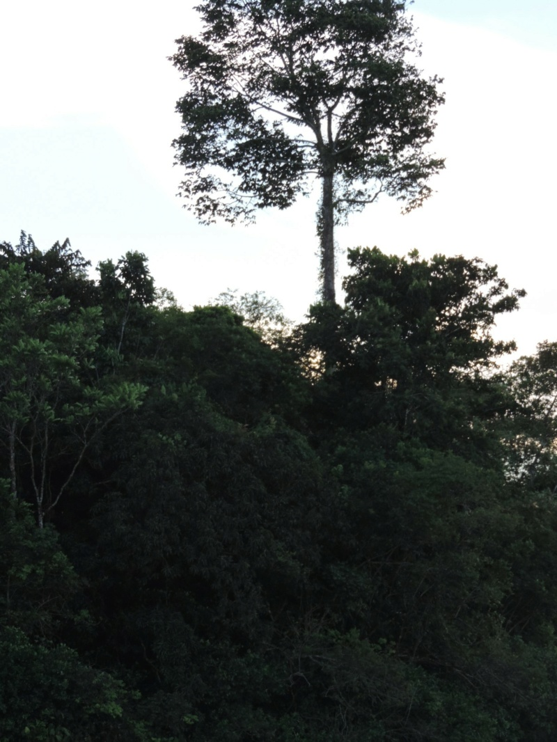 La Guyane en 2018  - Page 10 Dscn9327