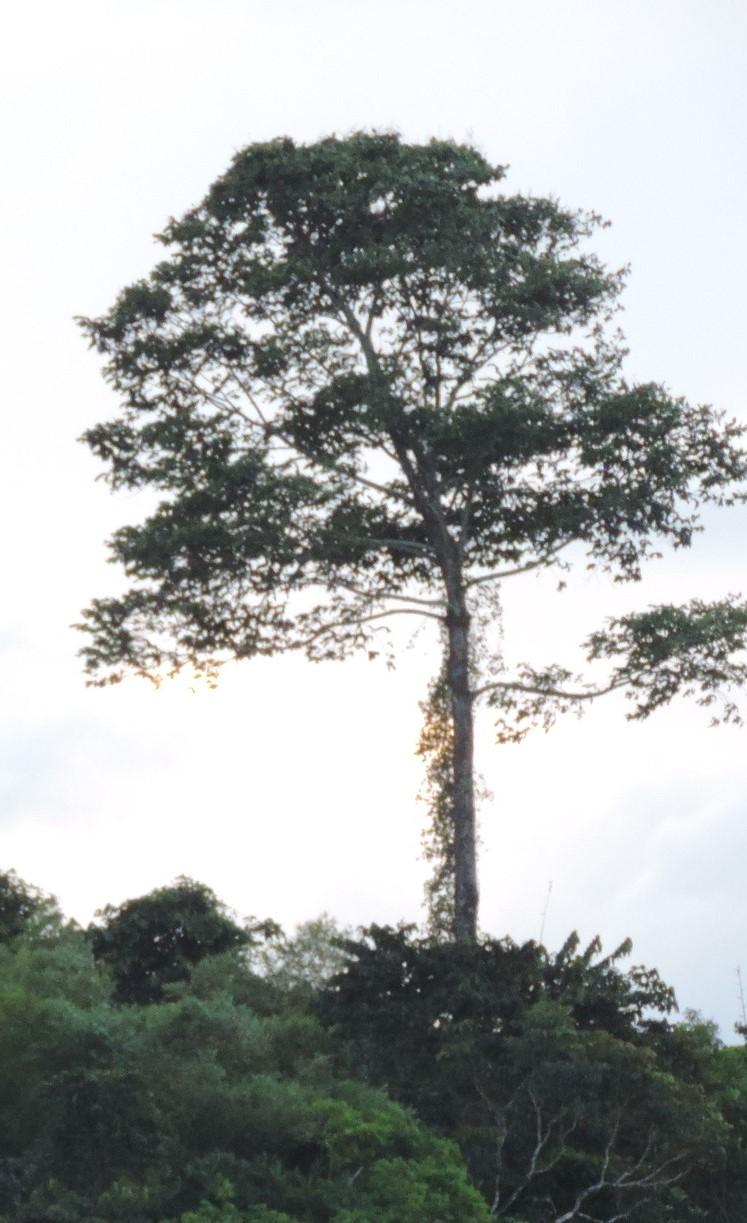 La Guyane en 2018  - Page 14 Dscn9337