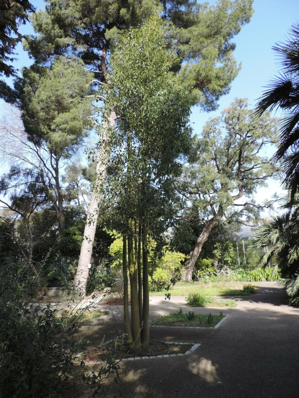 (13) Le parc Borely à Marseille  Dscn9340