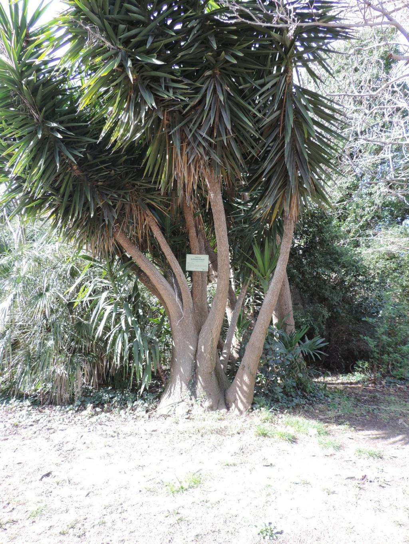 (13) Le parc Borely à Marseille  Dscn9345