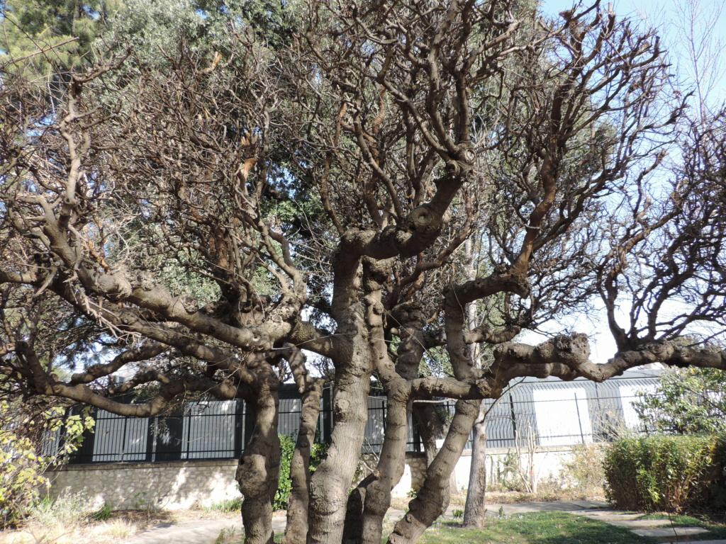 (13) Le parc Borely à Marseille  Dscn9352
