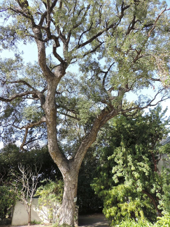 (13) Le parc Borely à Marseille  Dscn9353