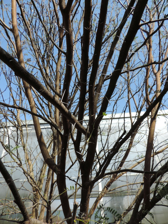 (13) Le parc Borely à Marseille  Dscn9356