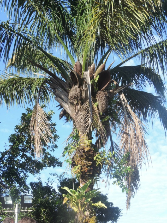 La Guyane en 2018  - Page 7 Dscn9424
