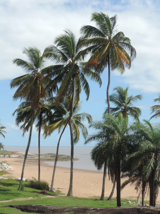 La Guyane en 2018  - Page 7 Dscn9518