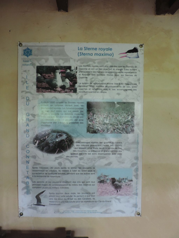 La Guyane en 2018  - Page 10 Dscn9621