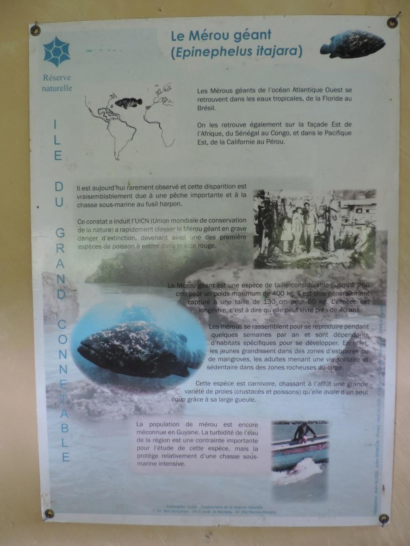La Guyane en 2018  - Page 10 Dscn9625