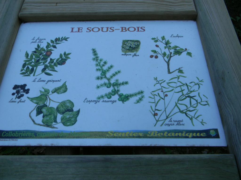 (83) Parc Saint-Bernard et Villa Noailles - Hyères - Page 5 Dscn9640
