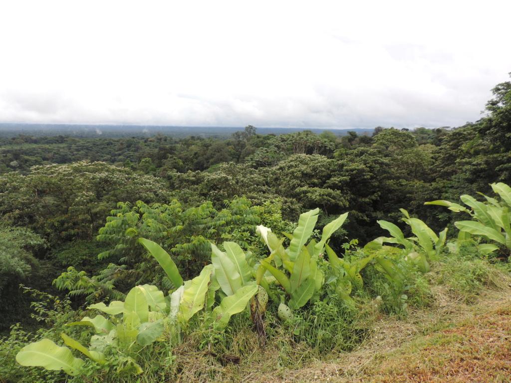 La Guyane en 2018  - Page 16 Dscn9653