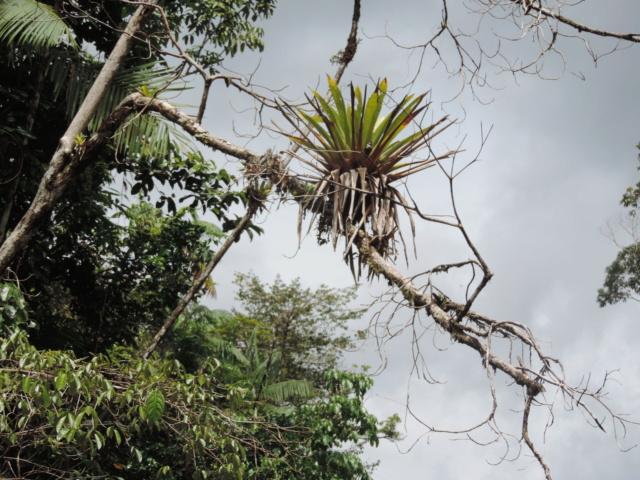 Support à épiphytes et broméliacées rustiques - Page 5 Dscn9710