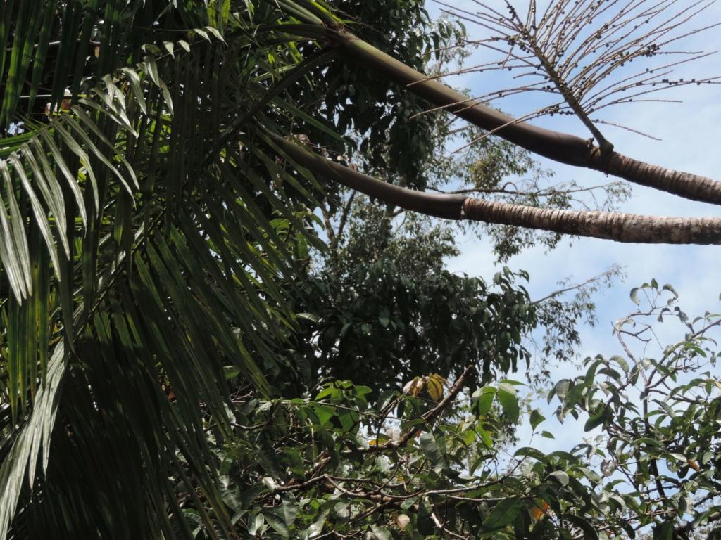 La Guyane en 2018  - Page 10 Dscn9723