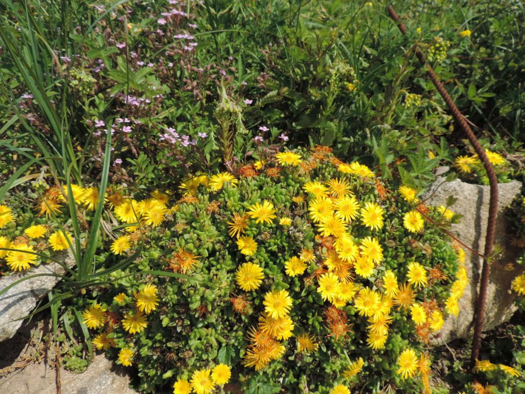 Air d'été au jardin - Page 2 Dscn9747