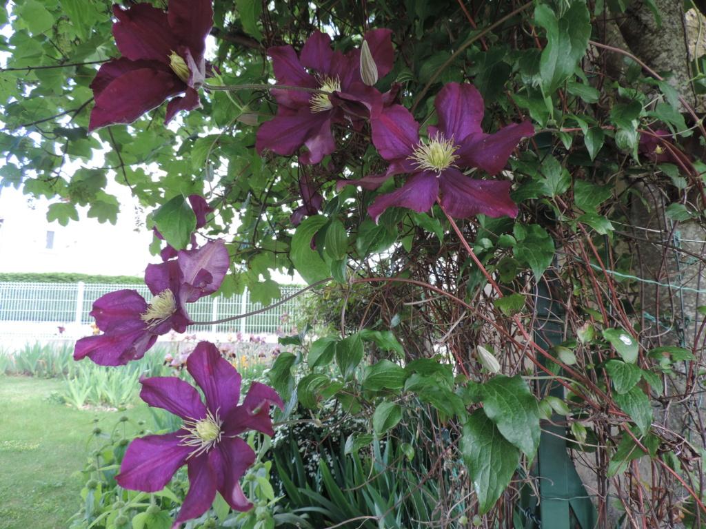 Air d'été au jardin - Page 2 Dscn9749