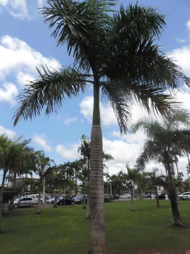 La Guyane en 2018  Dscn9812