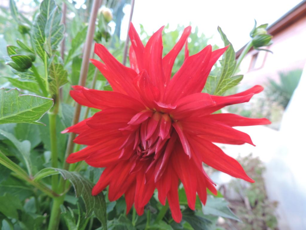 Les botanistes  Dscn9979