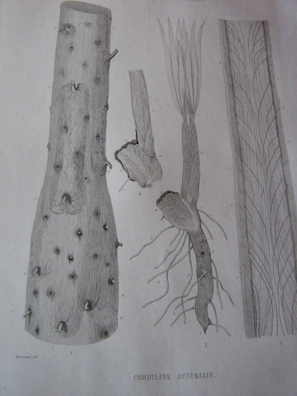 Les botanistes  Img_0015