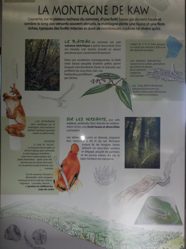La Guyane en 2018  - Page 9 Img_2012