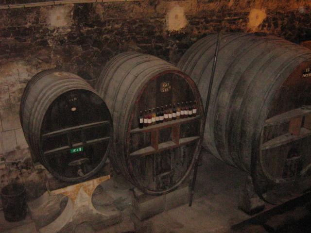 Vitis vinifera - vigne Jarden11