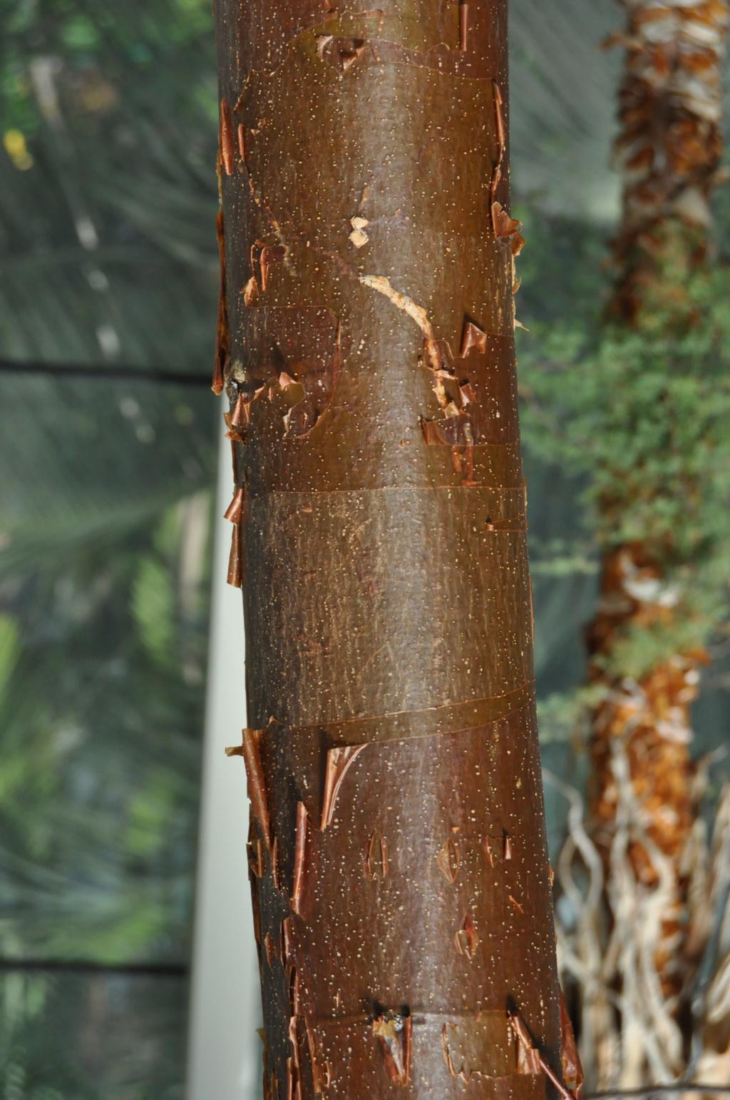 Petite devinette d'un arbre (peut être difficile) en serre  Jardin19