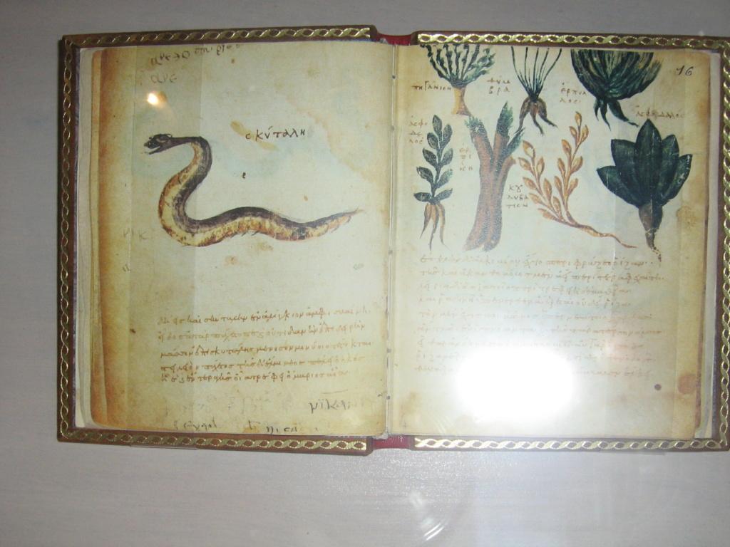 Les botanistes  - Page 4 Maroc_17