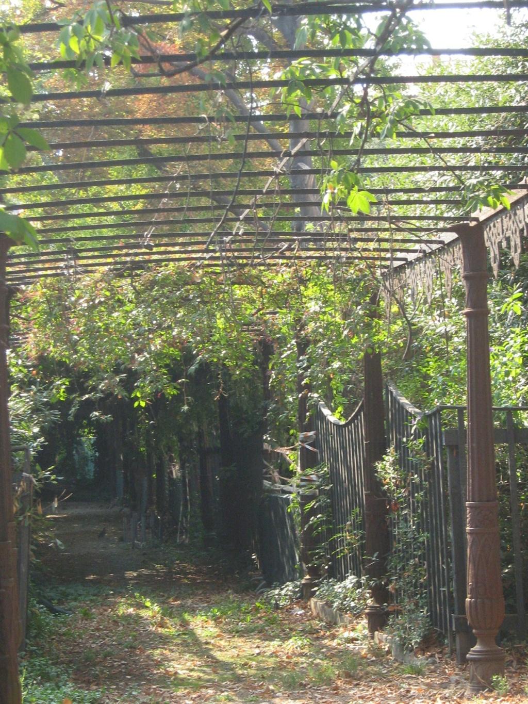 Venise paysages et jardins  Morgan20