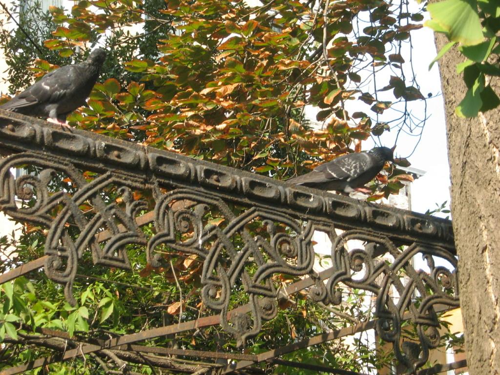 Venise paysages et jardins  Morgan21