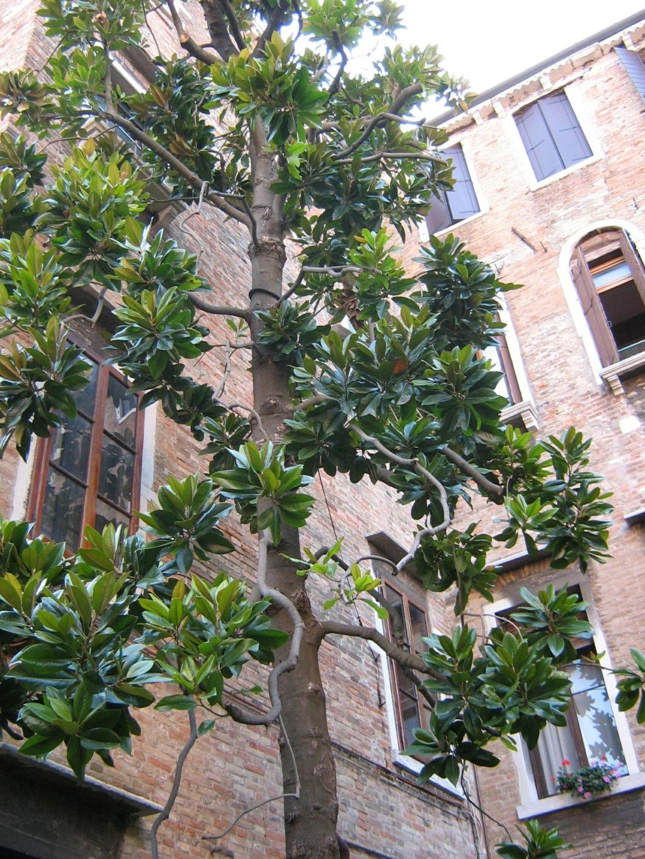 Venise paysages et jardins  Morgan27