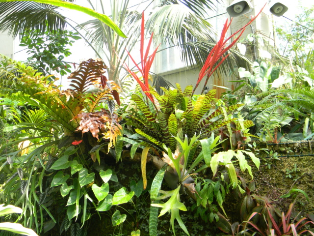 Bromeliaceae - famille - collections  - Page 6 Nice_p55