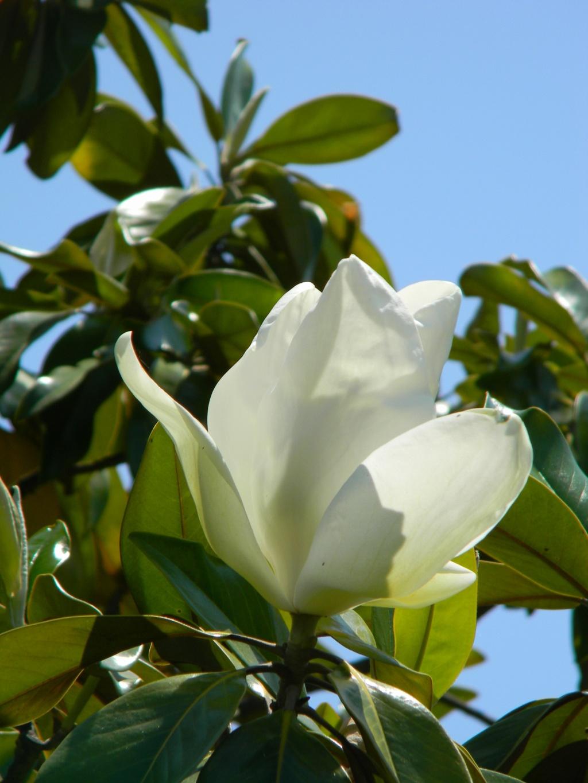 Les botanistes  Nice_p80