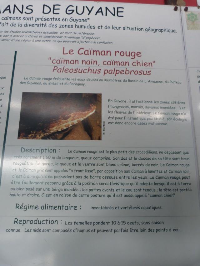 La Guyane en 2018  - Page 9 P1090716