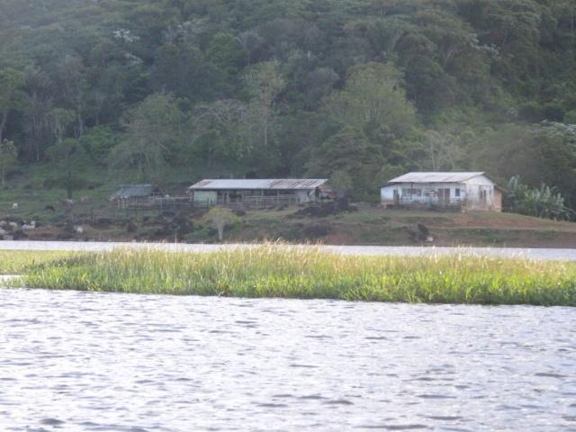 La Guyane en 2018  - Page 9 P1090813