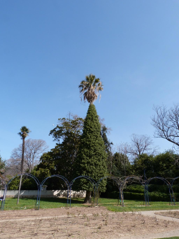 (13) Le parc Borely à Marseille  P1110224
