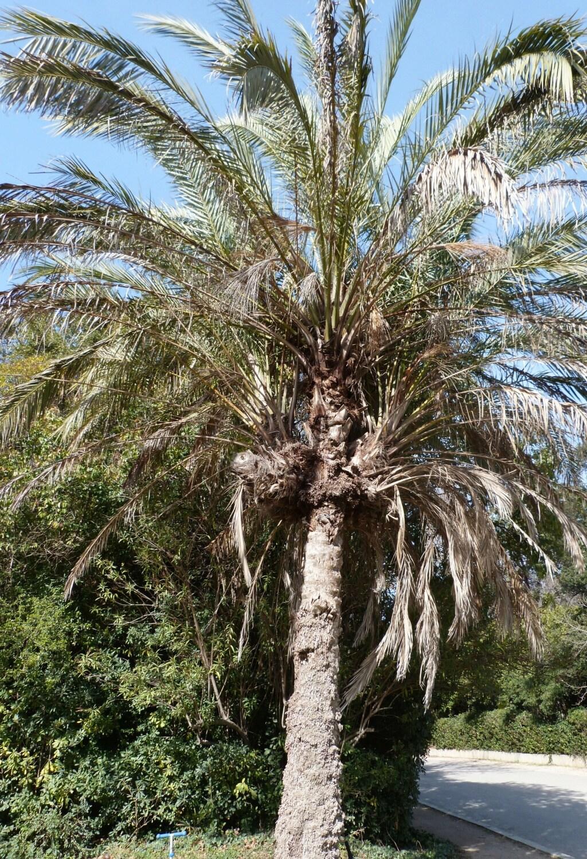 (13) Le parc Borely à Marseille  P1110230