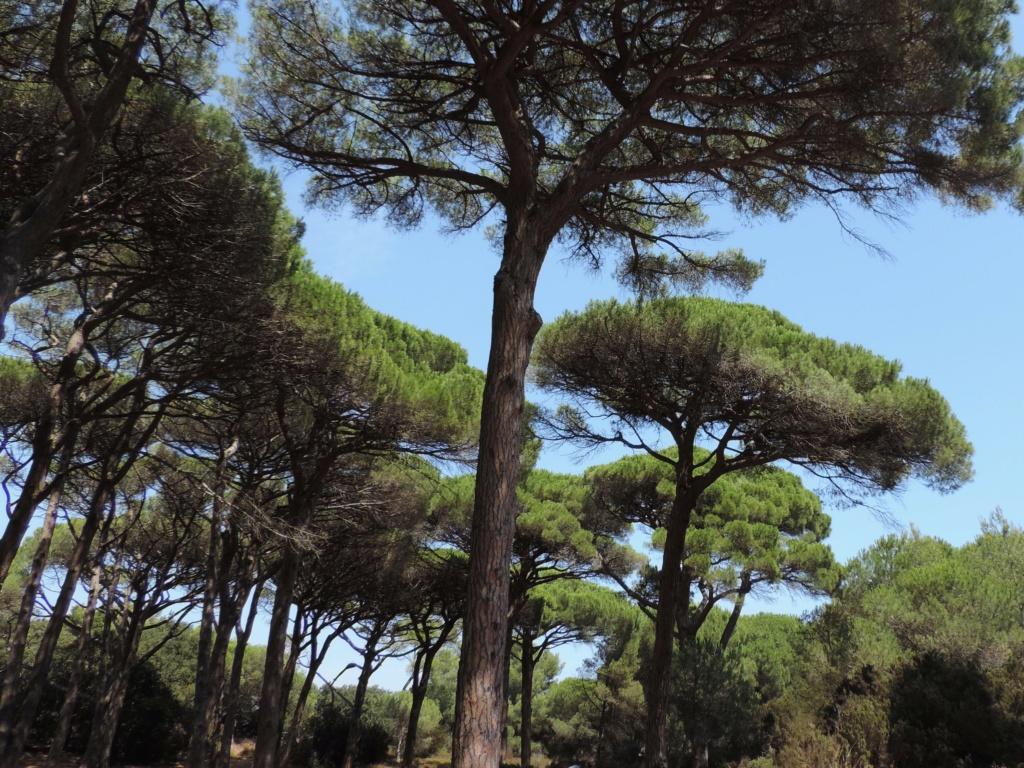 """Déficoncours """"Sous de beaux cieux"""" - les participations Toulon10"""