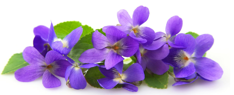 Muchas Felicidades, Violetta!!  Violet10