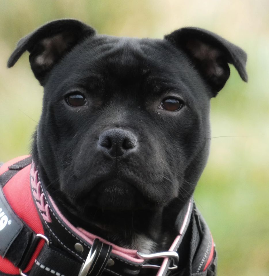 hi everyone just want to introduce our new girl delta 12779411