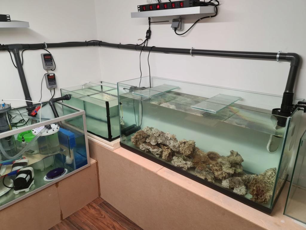 Ma nouvelle installation 1000l avec fish  room 20210315