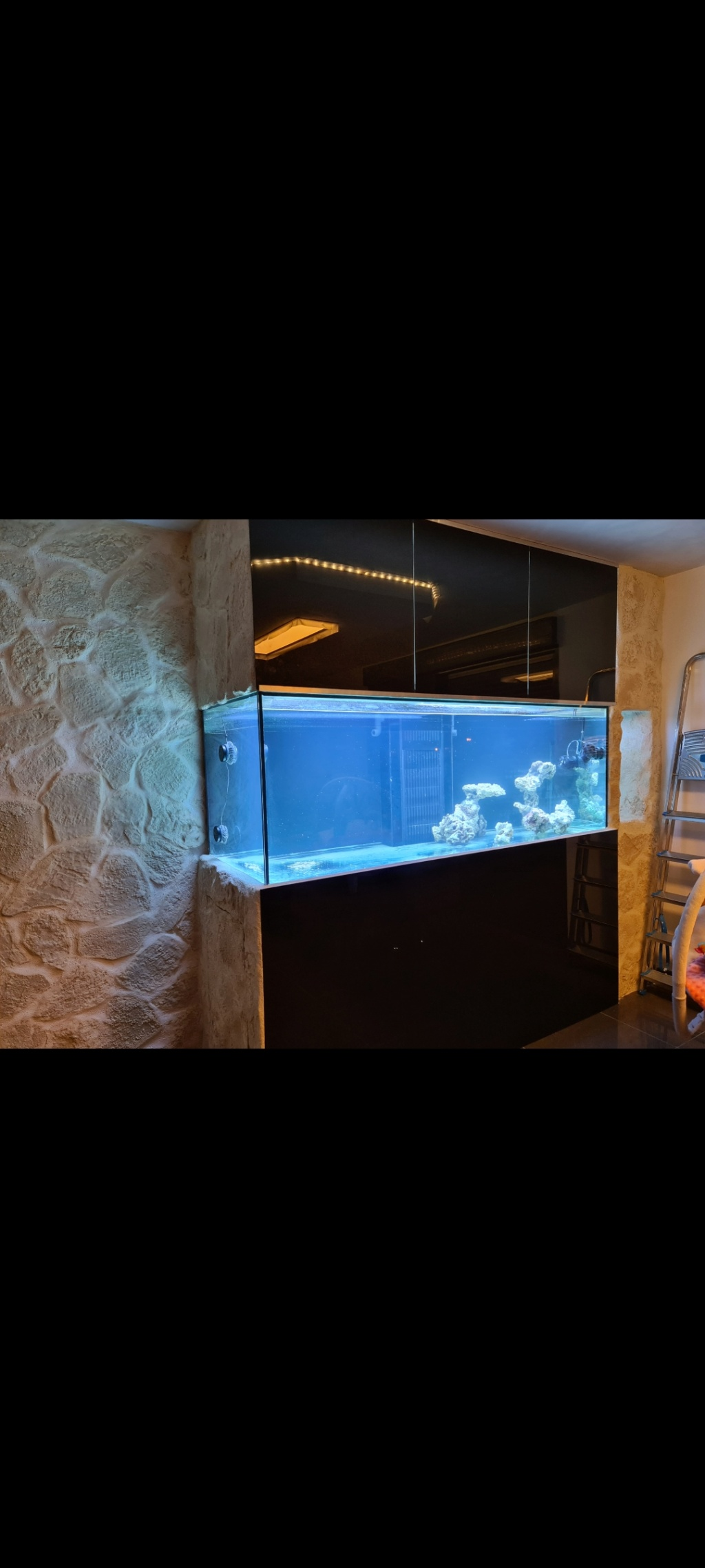 Ma nouvelle installation 1000l avec fish  room Screen12