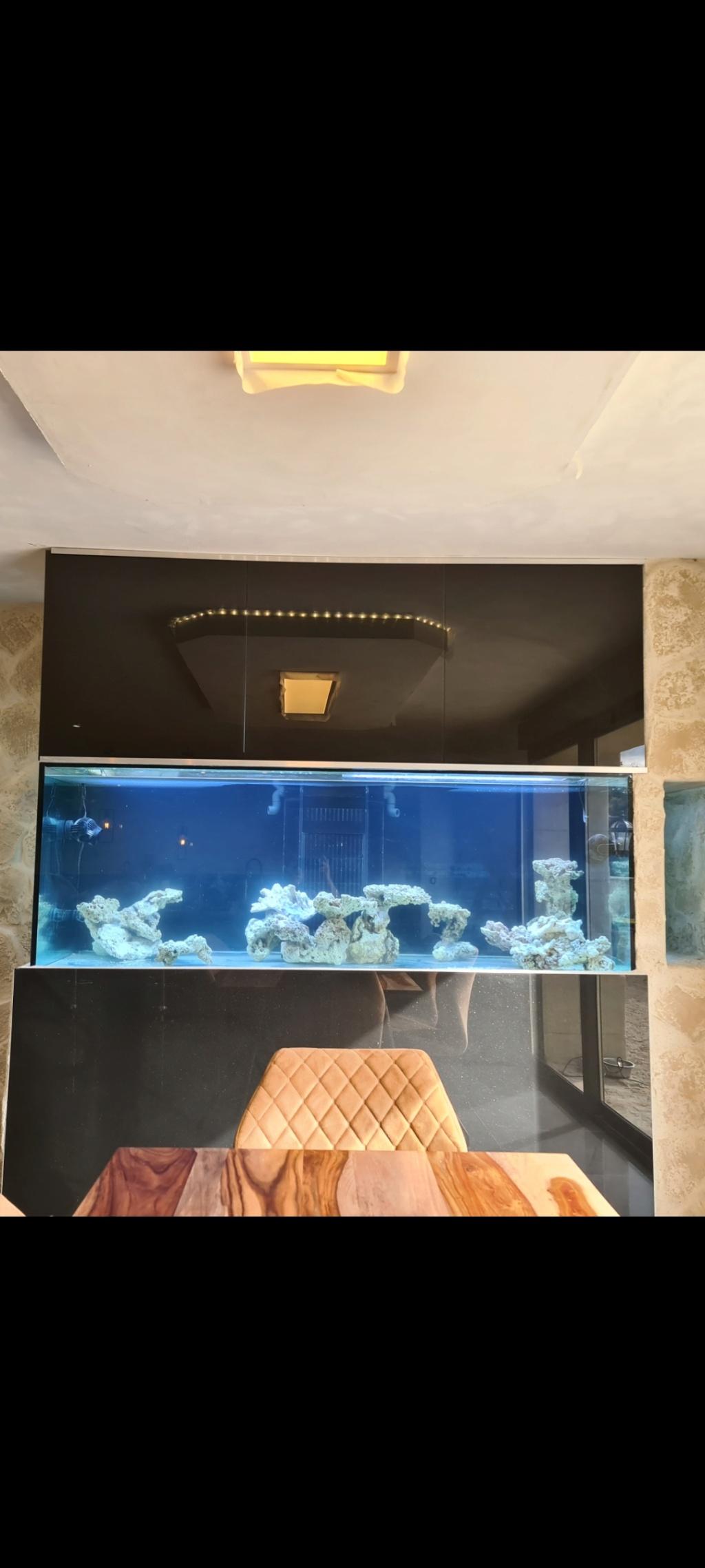 Ma nouvelle installation 1000l avec fish  room Screen14